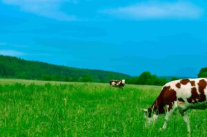 DairyCEPT - Dairyreporter podcast