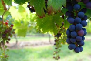 WineCEPT blog post